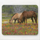El caballo cuarto en el campo de wildflowers acerc tapetes de ratones