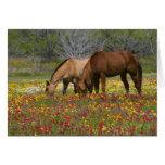 El caballo cuarto en el campo de wildflowers acerc tarjeta de felicitación