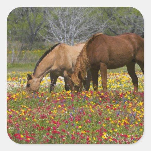 El caballo cuarto en el campo de wildflowers pegatina cuadrada