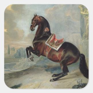 El caballo de bahía oscuro 'Valido Pegatina Cuadrada