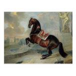 El caballo de bahía oscuro 'Valido Tarjetas Postales