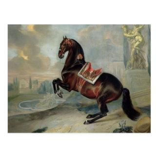 El caballo de bahía oscuro 'Valido Postal