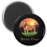 El caballo de Brown diseña puesta del sol Iman De Frigorífico