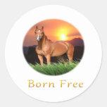 El caballo de Brown diseña puesta del sol Pegatinas Redondas