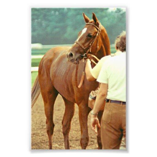 El caballo de carreras excelente afirmó 1978 impresiones fotograficas