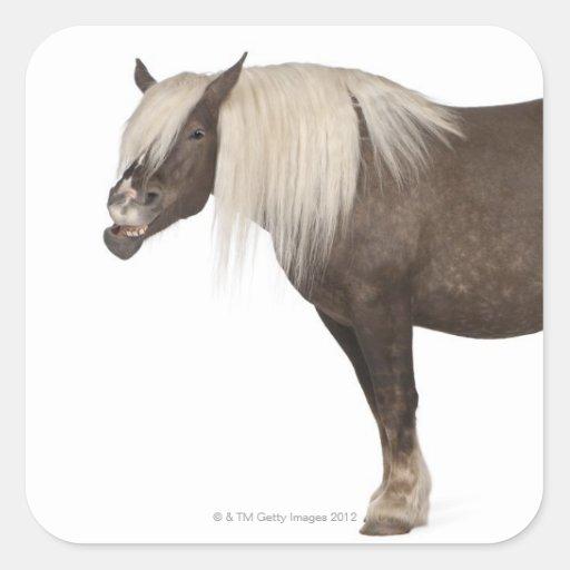 El caballo de Comtois es un caballo de proyecto - Pegatina Cuadrada