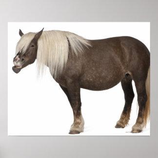 El caballo de Comtois es un caballo de proyecto - Póster
