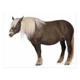 El caballo de Comtois es un caballo de proyecto - Postales