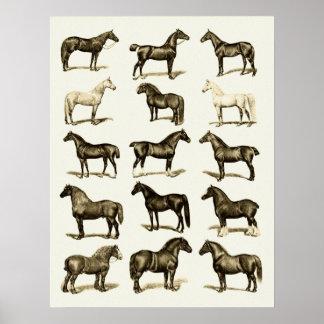 El caballo del arte del vintage cría la pared impr