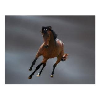 El caballo del vaquero llamó Riboking Tarjetas Postales