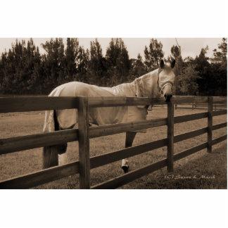El caballo en mosca viste la sepia que mira detrás esculturas fotográficas