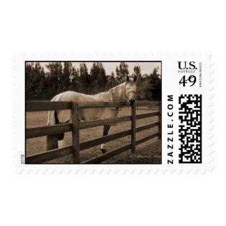 El caballo en mosca viste la sepia que mira detrás sellos