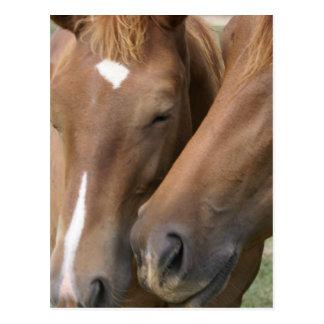 El caballo Nuzzle la postal