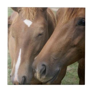 El caballo Nuzzle la teja