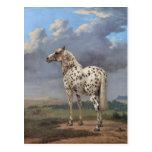 El caballo picazo tarjeta postal
