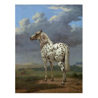 El caballo picazo tarjetas postales