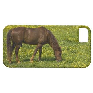 El caballo que pasta en ranúnculo coloca el caso iPhone 5 fundas