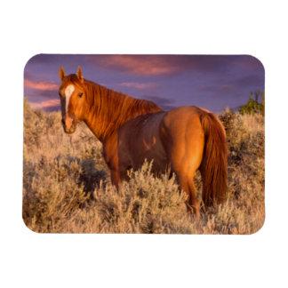 El caballo salvaje del condado de Harney se coloca Imanes Flexibles