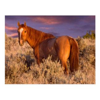 El caballo salvaje del condado de Harney se coloca Postal