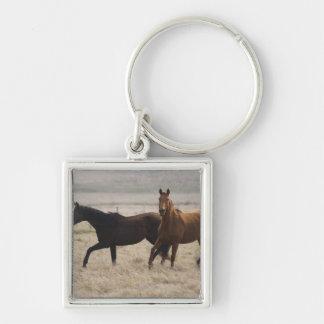 El caballo salvaje (ferus del Equus) es una especi Llaveros