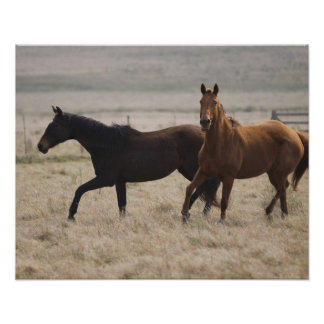 El caballo salvaje (ferus del Equus) es una Póster