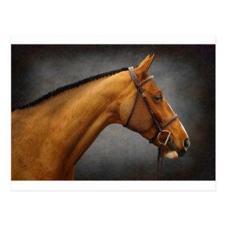 El caballo tarjeta postal