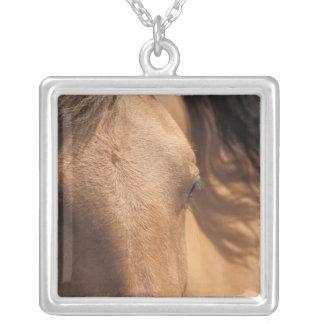 El caballo ve el collar