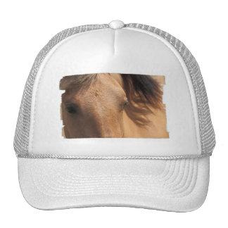 El caballo ve el gorra de béisbol