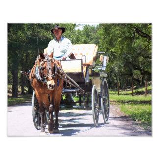 El caballo y el carro con errores montan en la fotografía