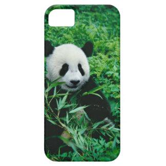 El cachorro de la panda gigante come el bambú en e iPhone 5 cobertura