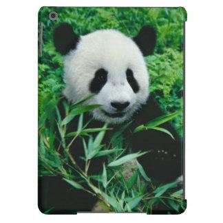 El cachorro de la panda gigante come el bambú en e funda para iPad air