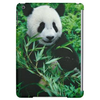 El cachorro de la panda gigante come el bambú en e