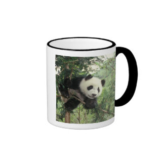 El cachorro de la panda gigante sube un árbol, taza de dos colores