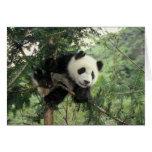 El cachorro de la panda gigante sube un árbol, val tarjetas