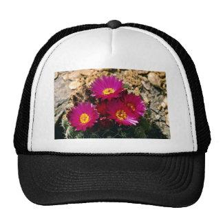 El cactus de barril florece las flores rosadas gorro de camionero