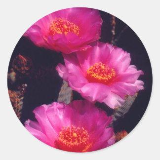 El cactus de Beavertail florece 2 Pegatina Redonda