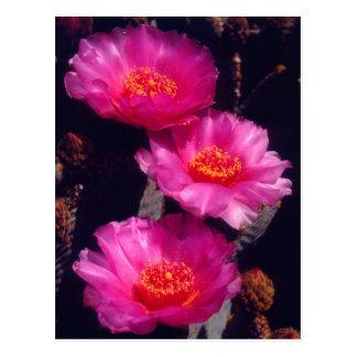 El cactus de Beavertail florece 2 Tarjetas Postales
