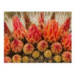 El cactus florece 012j postales