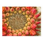 El cactus florece 016a postal