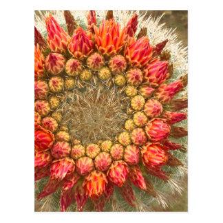 El cactus florece 016a tarjetas postales