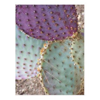 El cactus maravilloso natural de la belleza… color tarjeta postal