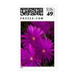 El cactus púrpura florece franqueo medio