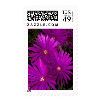 El cactus púrpura florece franqueo medio sellos
