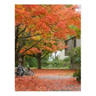 El caer roja de las hojas de otoño postal