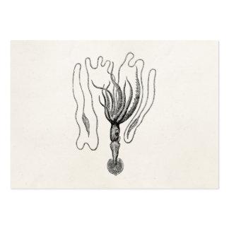 El calamar gigante de Bonellie del vintage - Tarjetas De Visita Grandes