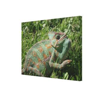 El camaleón agresivo envolvió la impresión de la l impresión en lona