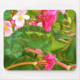 El camaleón de Jackson salvaje en la isla Hawaii d Tapetes De Raton