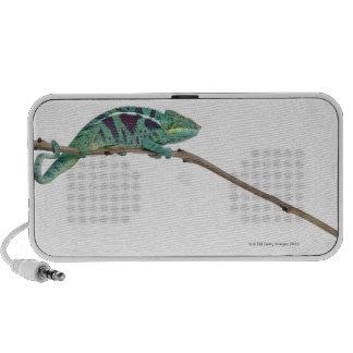 El camaleón de la pantera Nosy sea (los pardalis d iPhone Altavoz