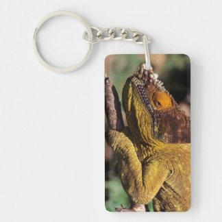 El camaleón de un párroco encaramado en una rama llavero