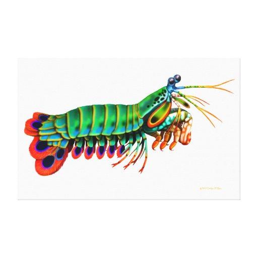 El camarón de predicador del pavo real estiró la i impresiones de lienzo